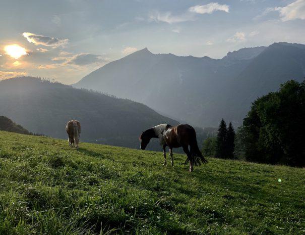 10. Pferd